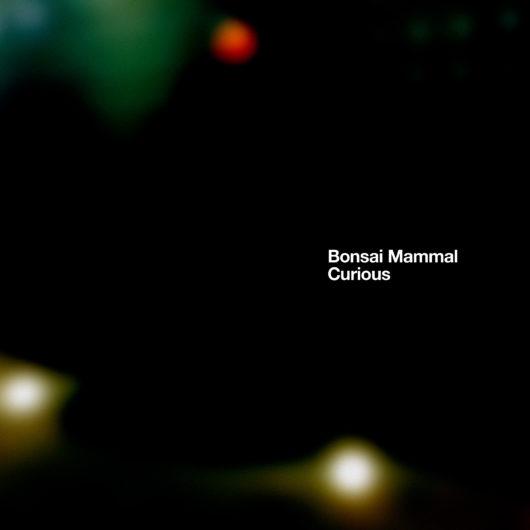 bonsai mammal curious